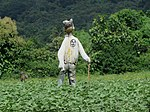 Scarecrow IMG 8737.jpg