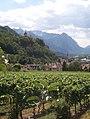 Schlossvaduzvineyards.jpg