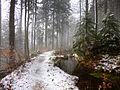 Schnee taut.JPG
