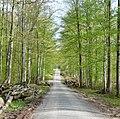 Schwarzwald-Schwäbische-Alb-Allgäu-Weg (HW5) - panoramio (1).jpg