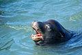 Sea Lion (2940057842).jpg