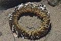 Sea anemone (42252318325).jpg