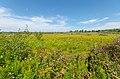 Sedge Meadow - Fen - Flickr - wackybadger (1).jpg