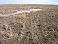 Seeded playa which is habitat for rare plants in SW Idaho.jpg