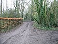 Selection of muddy tracks, looking SE from sharp bend, Woodlands Road - geograph.org.uk - 331932.jpg