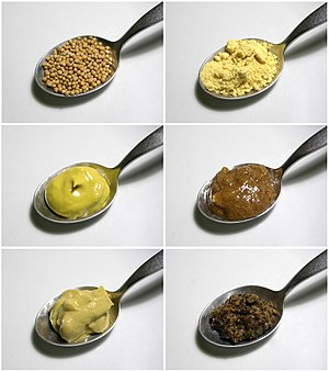 Mustard (condiment) - Mustard seeds (top left) may be ground (top right) to make different kinds of mustard. These four mustards are: English mustard with turmeric coloring (center left), a Bavarian sweet mustard (center right), a Dijon mustard (lower left), and a coarse French mustard made mainly from black mustard seeds (lower right).