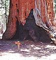 Sequoias (54).jpg