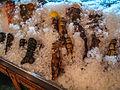 Serbian seafood restaurant (7360169286).jpg