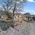 Serengetidrive.jpg