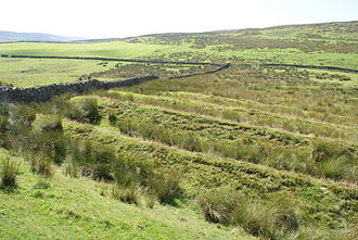 Whitley Castle - Seven banks and ditches (filled with rushes) on the western, uphill side of the Roman fort
