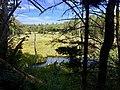 Shaker Brook Swamp off AT October Mountain Forest.jpg