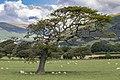 Shaun's tree (23341361626).jpg