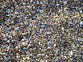Shingle on Tankerton beach - geograph.org.uk - 1068918.jpg