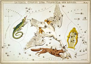 Cygnus (constellation) - Cygnus as depicted in Urania's Mirror, a set of constellation cards published in London c.1825. Surrounding it are Lacerta, Vulpecula and Lyra.