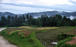 Rice terraces in the hills of Sierra Bullones