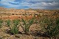 Sierra de las Cañas WSA (9473897280).jpg