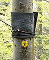 Sign on tree.jpg