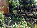 Singapore Zoo (24).jpg