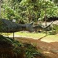 Sinharaja Rain Forest - panoramio (2).jpg