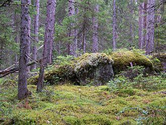 Skuleskogen National Park - The park's forest
