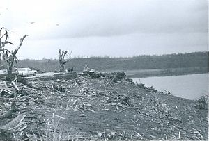 1974 Super Outbreak - Remains of a house that was completely swept away in Brandenburg, with heavily debarked trees and shrubbery in the foreground.