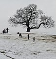 Sledging in Ashton Court - geograph.org.uk - 1155869.jpg