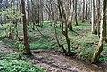 Small stream in Green Wood - geograph.org.uk - 1252970.jpg