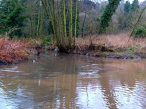River Stour, Worcestershire - Image: Smestow Brook 18 Stour confluence
