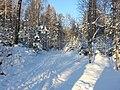 Snow (8253993977).jpg
