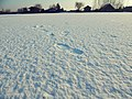 Snow Footprints (200926155).jpeg