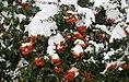 Snowy day of Tehran - 13 January 2007 (13 8510230258 L600).jpg
