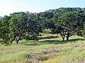 Solano-hillside 002.jpg