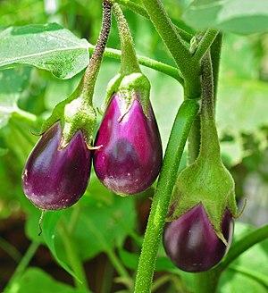 Eggplant - Image: Solanum melongena 24 08 2012 (1)