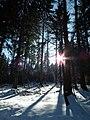 Sonnenstrahlen zwischen Bäumen.JPG