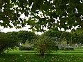 Sous les platanes du jardin des plantes.jpg