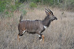 South African Safari Wildlife1.jpg