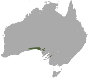 alt=Description de l'image Southern Hairy-nosed Wombat area.png.