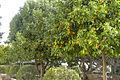 Spain-Badajoz-P1170632 (25592984380).jpg