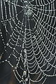 Spider web necklace with pearls of dew.JPG