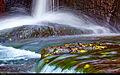 Splash (15571689310).jpg