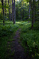 Spring-morning-hiking-trail - West Virginia - ForestWander.jpg