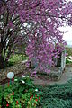 Spring Colors Emerge on a Bomb Shelter - Kibbutz Matzuva (2333181900).jpg