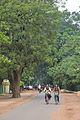 Sriniketan-Santiniketan Road - Bolpur 2014-06-29 5391.JPG