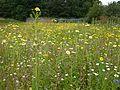 Stackpole Walled Garden - panoramio (1).jpg
