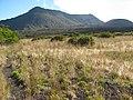 Starr-110810-7963-Plantago lanceolata-habit-Oili Puu HNP-Maui (25103091795).jpg
