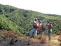 Starr-111012-8776-Andropogon virginicus-burn area with Forest Daniel and Poimaikai-Kahana-Maui (24823736740).jpg