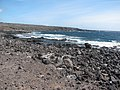 Starr-121220-9323-Prosopis pallida-habit view coast-Sailors Hat-Kahoolawe (24903768200).jpg