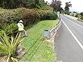 Starr-140624-0772-Phormium tenax-habit with Kim doing ant surveys State roads-Kekaulike Ave Kula-Maui (24875770189).jpg