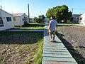 Starr-151215-0187-Cordia subcordata-Lynx boardwalks and huts-Honokanaia-Kahoolawe (26285148595).jpg