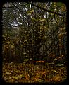 Staying Still 1 - Late Autumn At The Fairy Tree.jpg